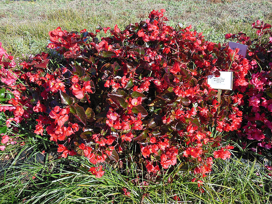 Plants That Do Well In Sun And Shade Credainatcon